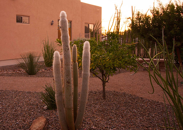 AspenCare-backyard-sunset-med-2